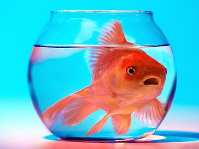 The fish bowl gig harbor vs peninsula 365 things to do around gig